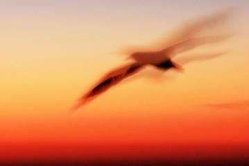evening-flight