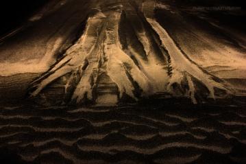 sand-forrest